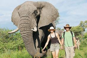 ELEPHANT-INTERACTION.jpg