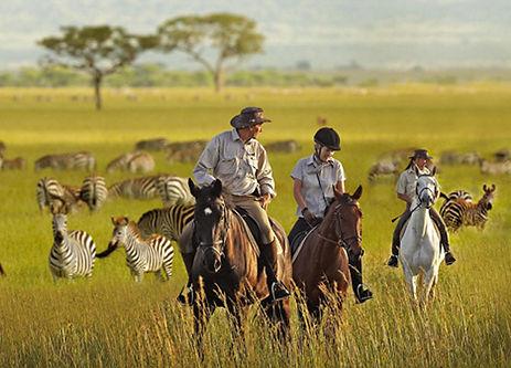 1-Wildlife-Experiences-2.jpg