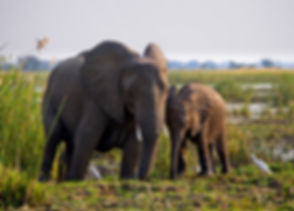 13-WILDLIFE-SAFARI.jpg