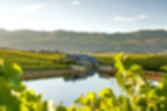 Hermanus-Wine-Estate.jpg