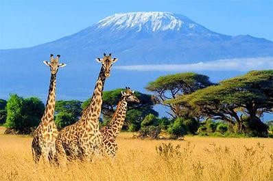 Ma Mara Giraffe