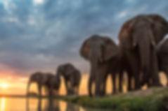 ELEPHANT-JABULANI.jpg