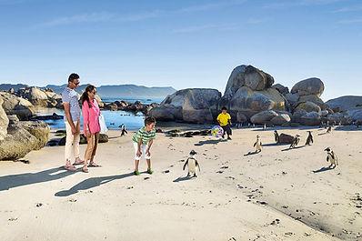 BOULDERS-BEACH-PENGUINS-FAMILY.jpg