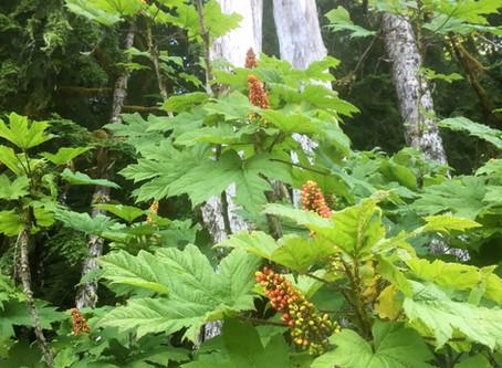 Language of Plants