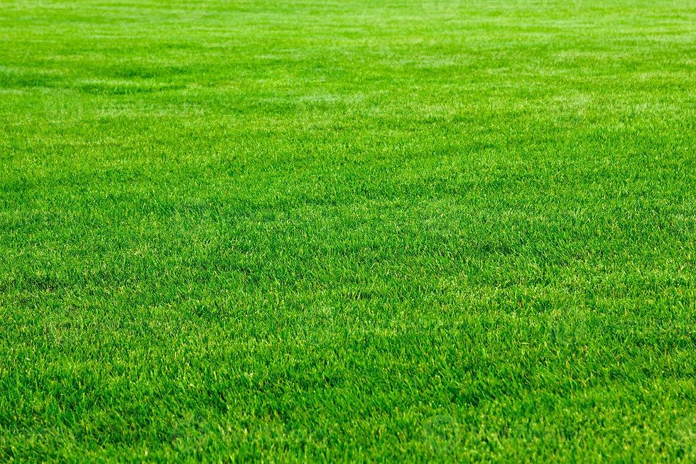 green-grass-background-photo.jpg