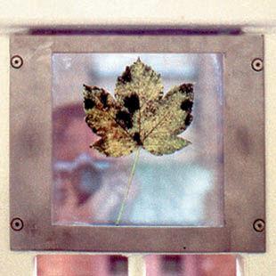 glassleaves-sq.jpg