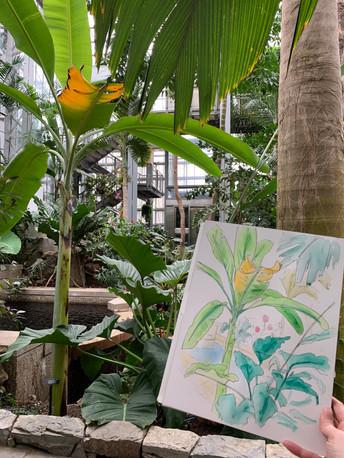DC Botanic Gardens sketch