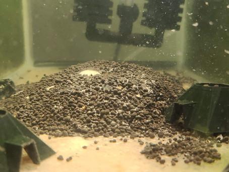 Breeding Tank Setup