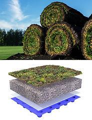4. Gras en sedum 31-3-2021.jpg