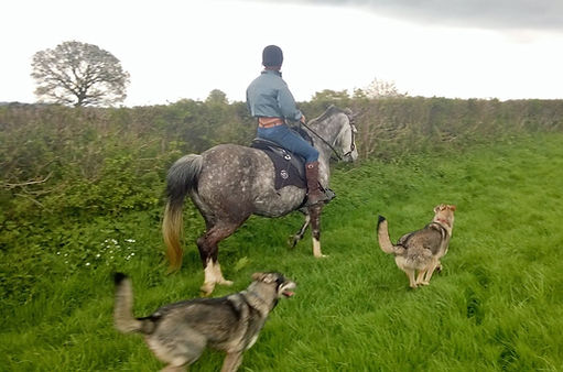 Pip Unwin Classical Natural Horsemanship Trainer and Dog Trainer riding in large open field in Wellington Somerset near Devon with her wolf dogs