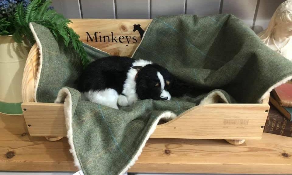 LUXURY TWEED DOG BLANKET RAFFLES MEDIUM