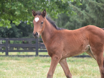 PUCCINI - DAME MAPPERLEY FILLY