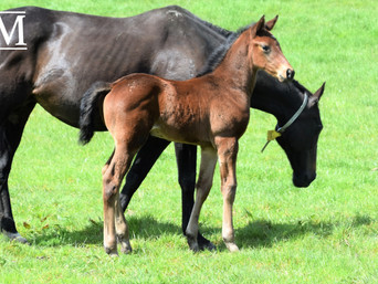 ROCK N POP - TONIC FILLY
