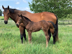 CHARM SPIRIT - ROC DE CHINE FILLY