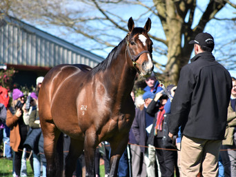 CONTRIBUTER FILLIES MAKE HEADLINES