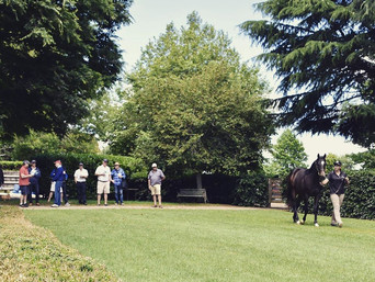 O'SHEA TOUR ARRIVES TO INSPECT KARAKA YEARLINGS