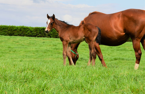 EMINENT - MAIA'S ANGEL FILLY