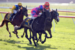 IMA ROCA BE WINS LISTED RYDER STAKES
