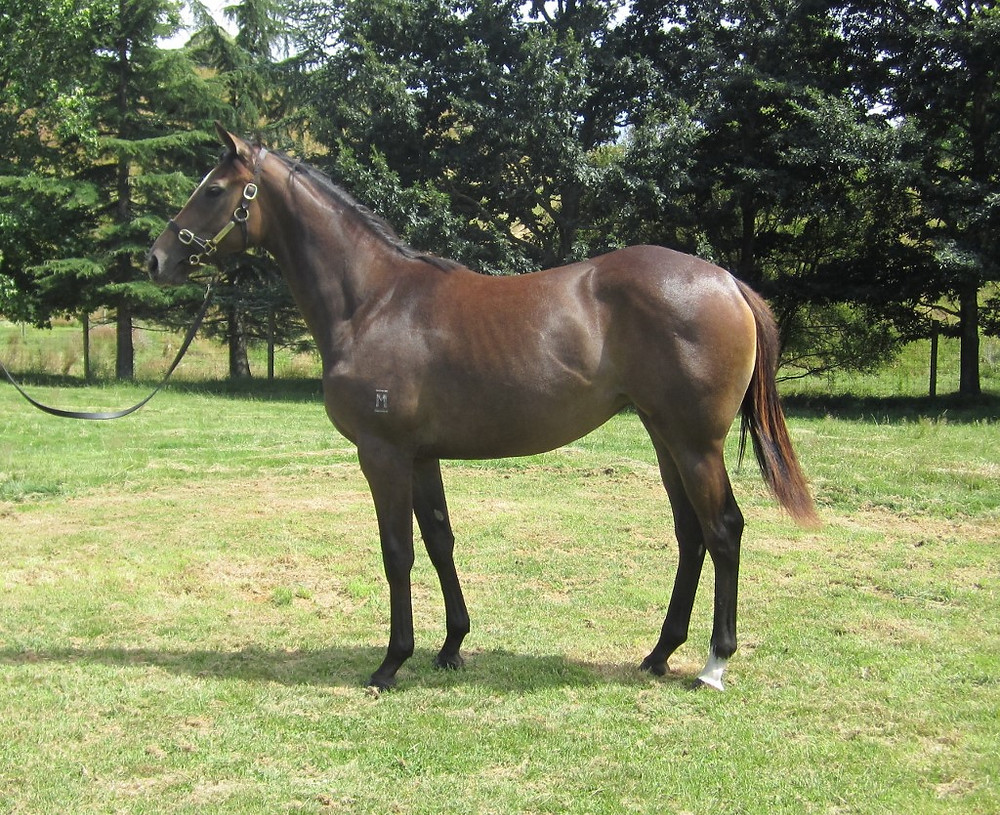 Pictured: Mime as a yearling at Mapperley Stud