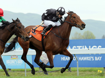 TRAINER TIPPING MARE TO ADD TO FAMILY RECORD