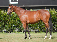 CONTRIBUTER GENERATING EXCITEMENT PRIOR TO YEARLING SALES