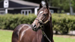 CONTRIBUTUER SELLS FOR $150,000