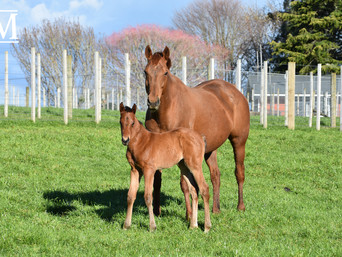 CHARM SPIRIT - KHAGAN FILLY