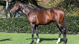CONTRIBUTER DELIVERS A WINNER FOR GODOLPHIN