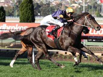 BRUTAL IMPRESSES AGAIN IN THE MCKENZIE STAKES