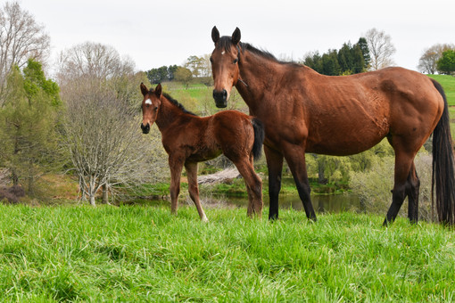 TIME TEST - ROCKELLE FILLY