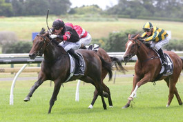 STAKES TARGETS BECKONS FOR PROMISING CONTRIBUTER FILLY