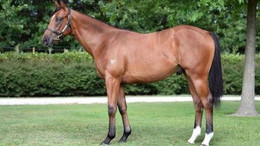 STALLION A MAJOR CONTRIBUTER TO O'SHEA AND CHAMPION'S PLANS