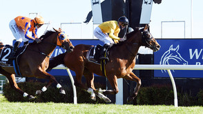COX PLATE CALLING MAV AFTER BACK TO BACK GR.1 WINS