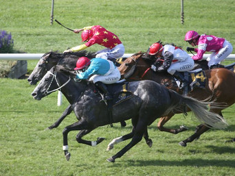 GR 2 QUINELLA FOR GREY DUO