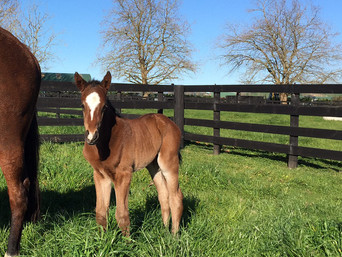FIRST FOAL FOR GR 1 TWO THOUSAND GUINEAS WINNER ATLANTEi