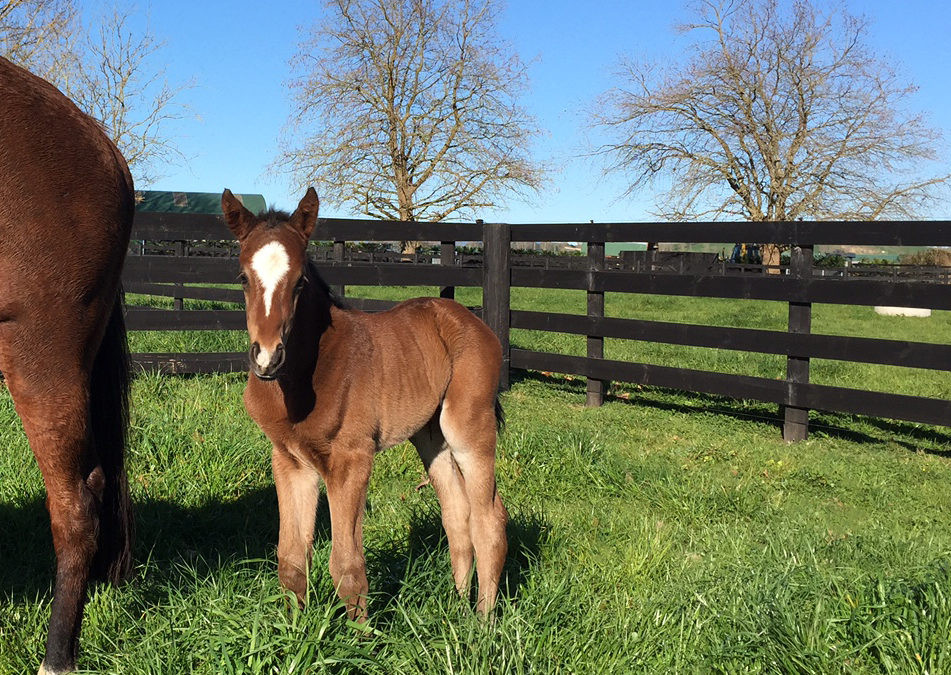 Pictured: Atlante colt from Shades of Silk