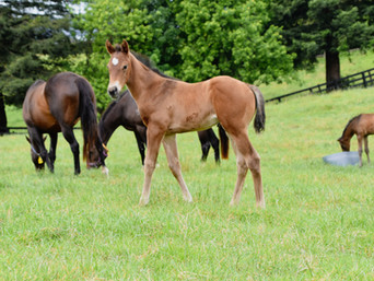COMPLACENT - TAHEYA COLT