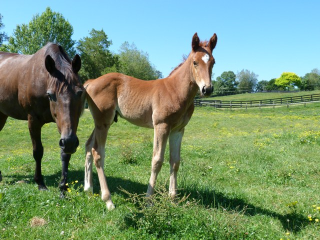 Chatelard as a foal