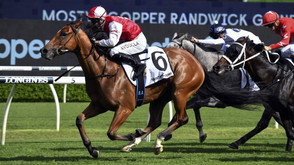 LION READY TO ROAR AT RANDWICK