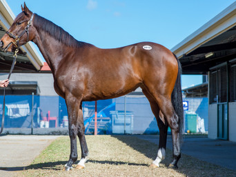 TE AKAU PICKS UP ANOTHER CONTRIBUTER YEARLING
