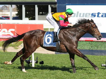 AGE OF CHIVALRY SALUTES AT CAULFIED