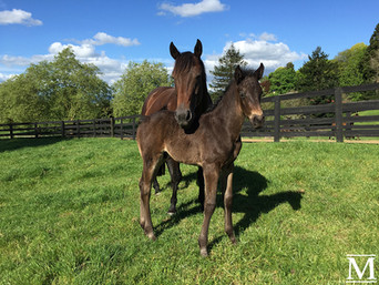 He's Remarkable - True Spirit Colt