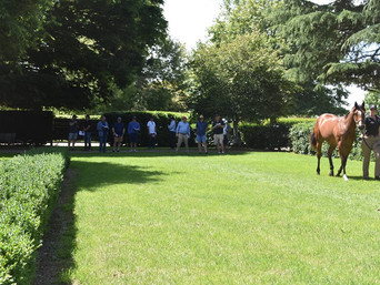 FIRST YEARLING PARADE OF THE SUMMER - JOHN O'SHEA'S TOUR VISITS