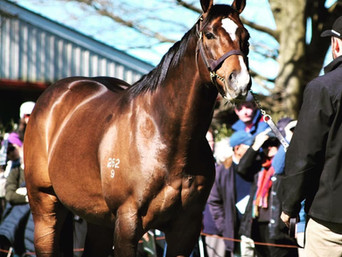 CONTRIBUTER SPEARHEADS MAPPERLEY STUD ROSTER
