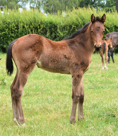 CONTRIBUTER - BLURRED VISION FILLY
