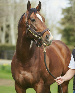 DOUBLE FOR CONTRIBUTER AT THE TRIALS