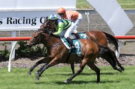 YEARN SALUTES IN GR.2 AUCKLAND THOROUGHBREED BREEDERS STAKES