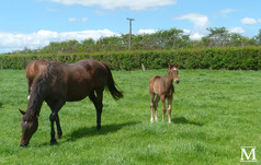 Giant's Steps - Suivez Moi Filly