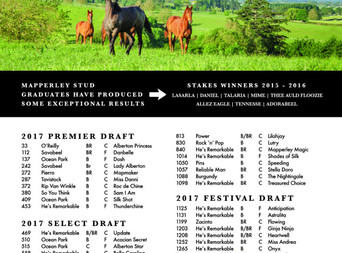 MAPPERLEY STUD 2017 NZB DRAFT TO FEATURE 36 YEARLINGS