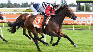 CONTRIBUTER FILLY IMPRESSIVE AT CAULFIELD